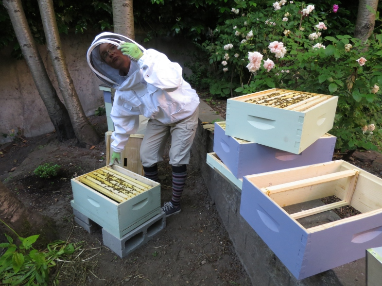 Hive inspection complete, Julia is getting ready to re-stack the boxes of Shura Bees.